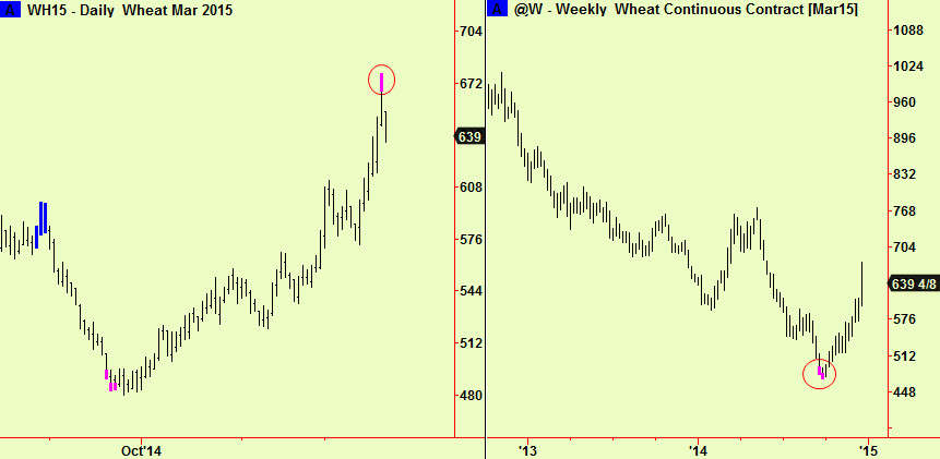 wheat daily and weekly