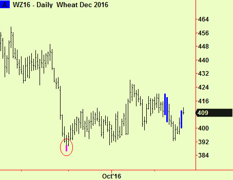 wheat-daily-comp