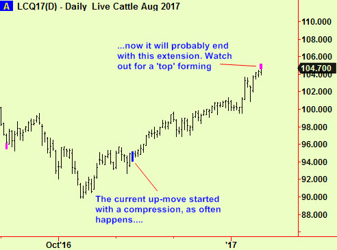 Live cattle top ext