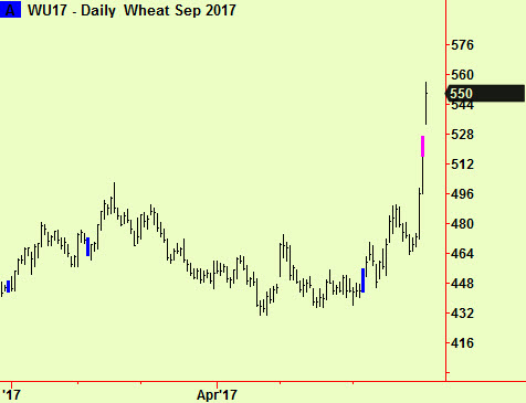 Wheat daily top ext